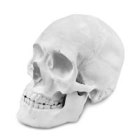 Anatomic Blank
