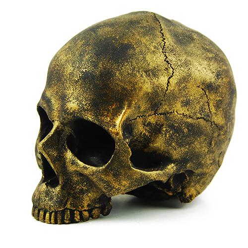 Craniu Gold